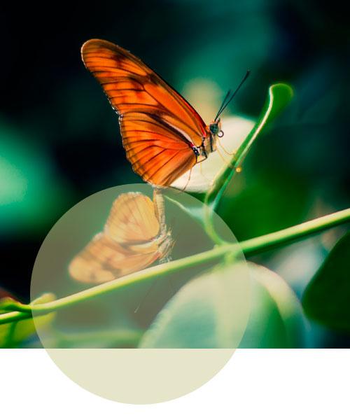 Prodotto-dettaglio-farfalla